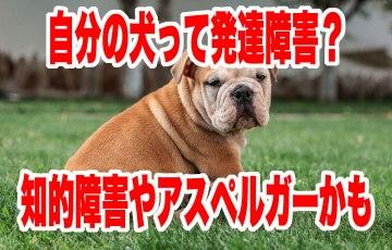 犬 発達 障害