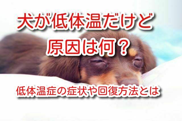 犬 低体温
