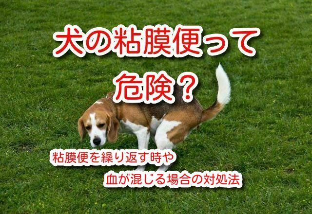 犬 粘膜便