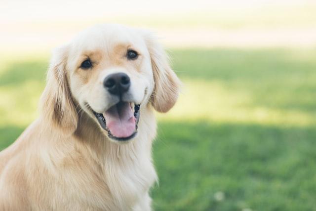 犬 歯周病