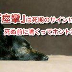 犬 痙攣 死