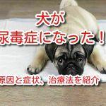 犬 尿毒症