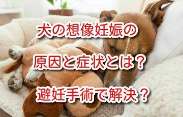 犬 想像妊娠