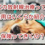 犬 放射線 治療
