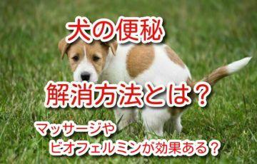 犬 便秘 解消