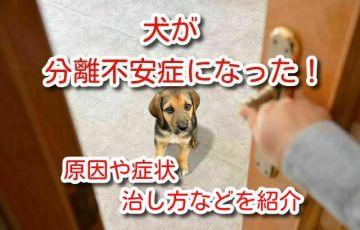 犬 分離不安症