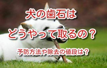 犬 歯石 除去 値段