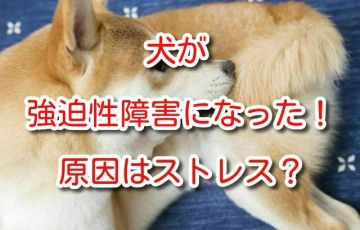 強迫性障害 犬