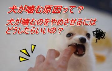 犬 噛む 原因