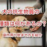犬 抗生物質