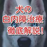 犬 白内障 治療