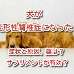 変形性脊椎症 犬