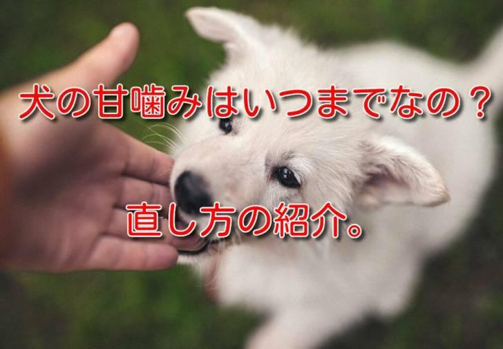 犬の甘噛みはいつまでなの?直し方の紹介。