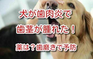 犬 歯肉炎 薬