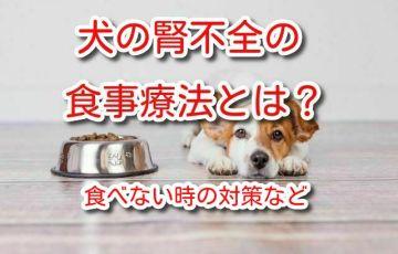 犬 腎不全 食べない