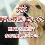 犬 扁平上皮癌