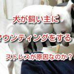 犬 マウンティング 飼い主