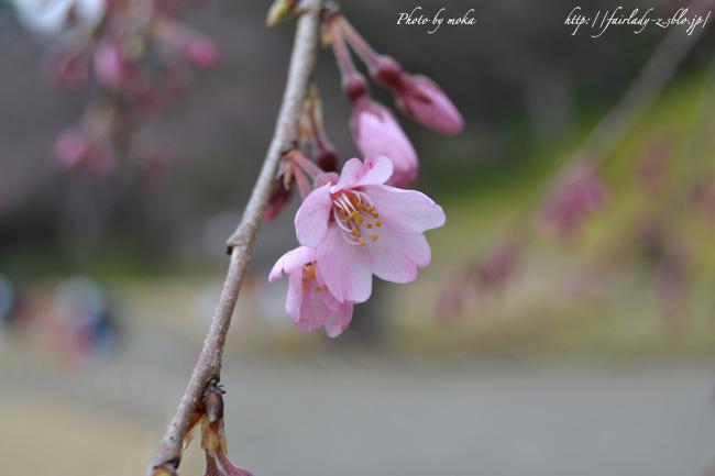 20110323_koishikawakourakue.jpg