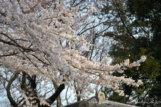 2011_asukayama20.jpg