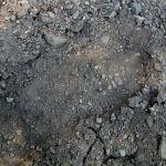 Alleged_Bigfoot_footprint