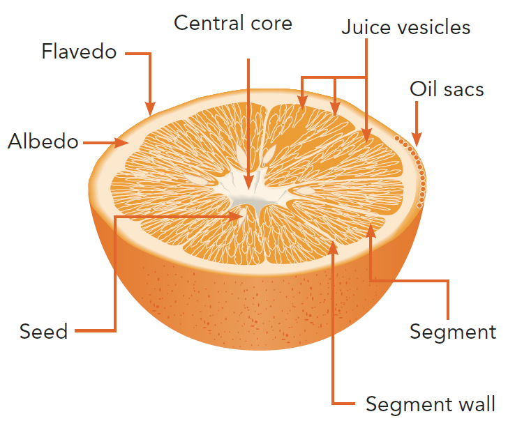 oil refining process diagram 8 wire thermostat wiring the orange fruit and its products | book