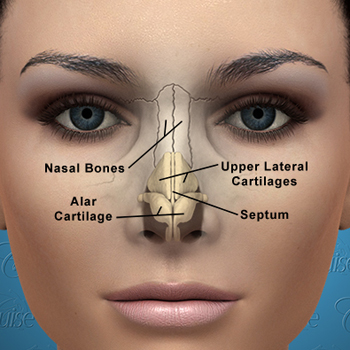 face bone diagram data flow symbols visio rhinoplasty orange county | deviated nose - newport beach surgery cruise plastic