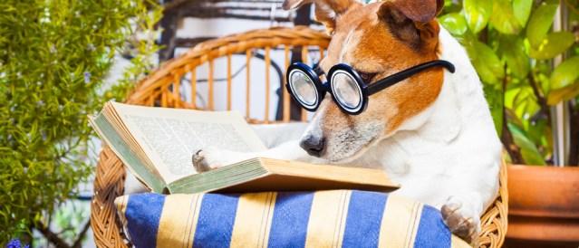 EVEN newshounds need to relax a little ... but very little.