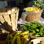 Guess What's New At The Farmers' Market — Opening Day June 28