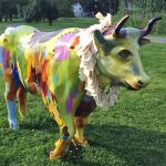 Oxen in Orange – Stampede 2019