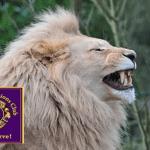 Orange Lions Comedy Night Fundraiser