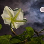 Tonight's Full Moon Is The Full Corn Moon