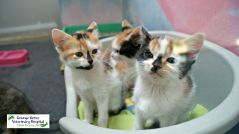 Unwanted kittens looking for homes at Animal Anti Cruelty League Johannesburg