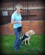 Opal & volunteer puppy raiser Heidi, taking a short break on the walk.