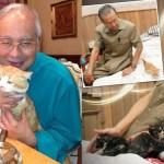 Britain ada kucing rasmi negara, Malaysia bila lagi?
