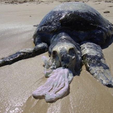 Penyu Laut Plastik