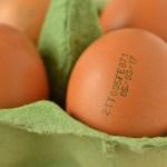 Telur ayam beracun di Indonesia, bahaya dimakan kerana boleh datangkan penyakit