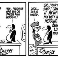 Penguins, Herring & Mayo