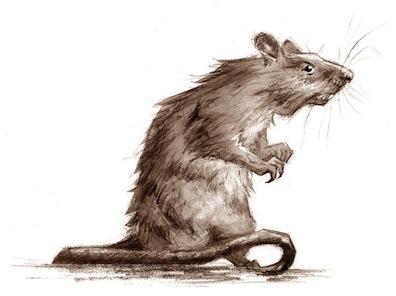 Rat_by_LinaLightning Caindo numa ratoeira, parte 1