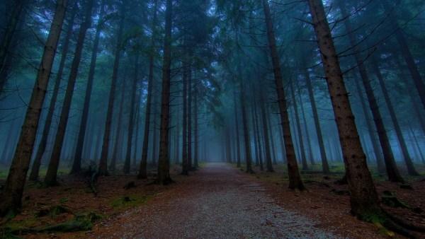 dnddark-woods-600x338 A Torre do Cavaleiro Vampiro, primeira parte
