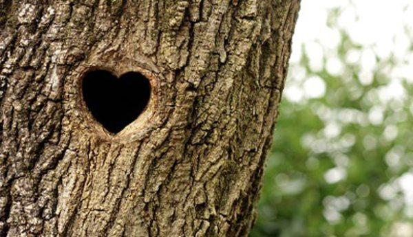 arvore-marcada-tree-love-600x345 Aventura CaLuCe: Caçada Insana em Vila da Pratinha – encontro marcado
