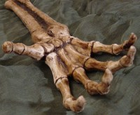 157a3-skeletal_hand_reaching_prop_by_fantasystock 157a3-skeletal_hand_reaching_prop_by_fantasystock