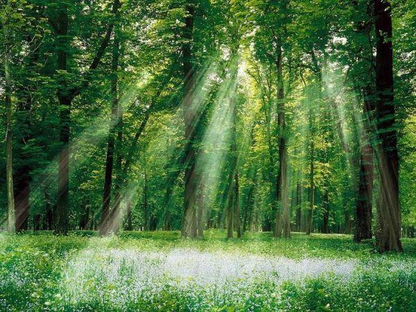 floresta-iluminada-600x450 O Cisma Élfico: o surgimento dos elfos das sombras