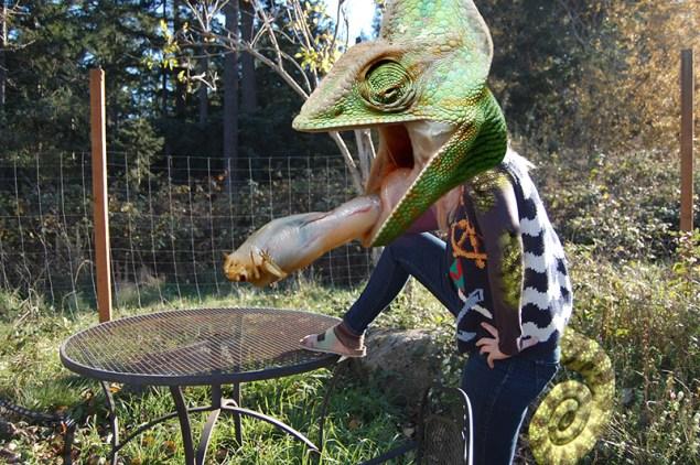 claire lizard