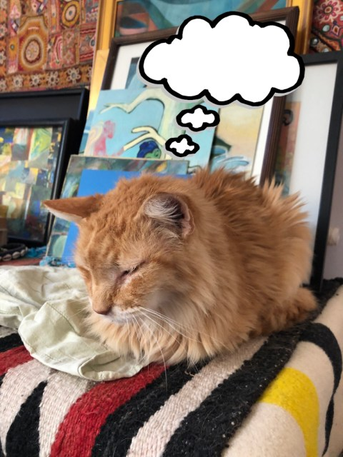 A fluffy cat dreaming