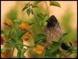 bird s