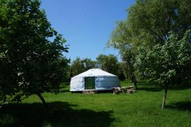 The yurt is in a secluded part of the orchard