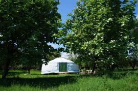 The yurt amongst the trees in the orchard