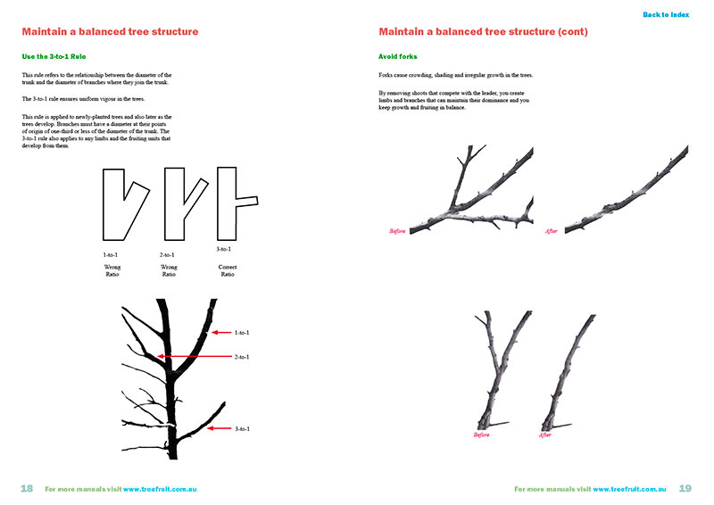 Orchard manual on pruning apples and pears