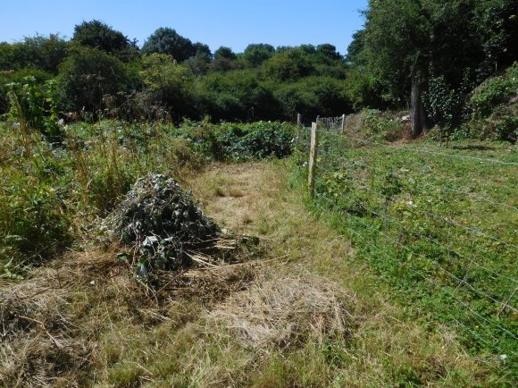 Cut back of brambles, nettles and Binding Weed on the outside of the fruiting hedge at St Margarets' to give the young hedge light and air.