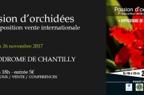 Exposition Orchidées Chantilly – novembre 2017